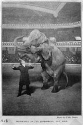 houdini_elephant