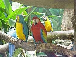 singapore_birds